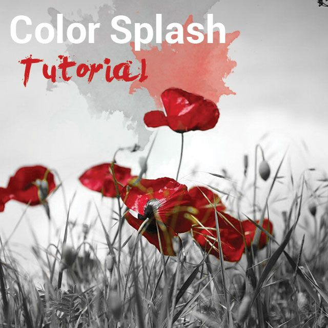 how to use color splash in photo editing