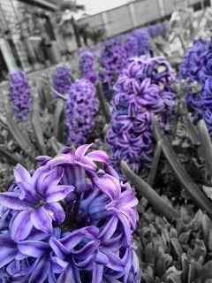 color splash flower spring