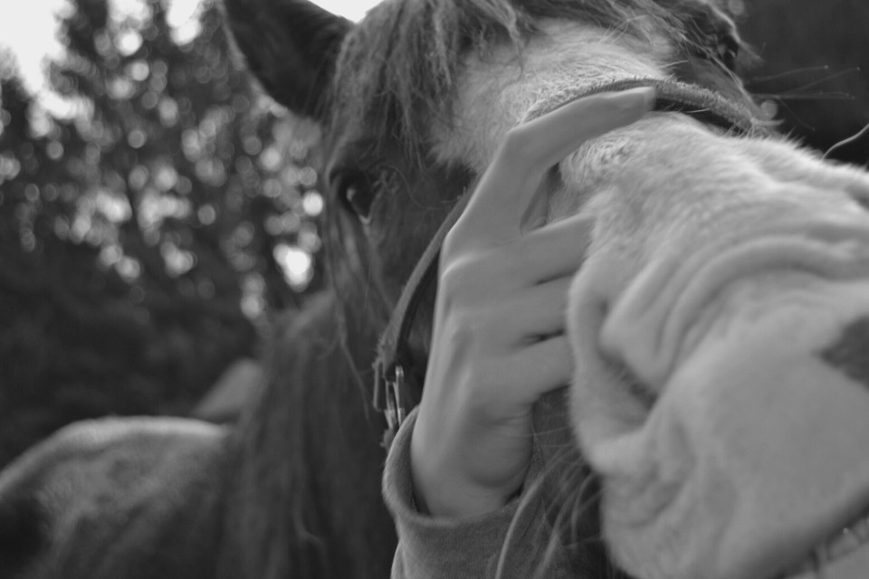 #Miss#It#Horses#Equestrian# :(   FOLLOW ME I FOLLOW BACK! /FOLLOW ON INSTAGRAMM : show_me_hihi