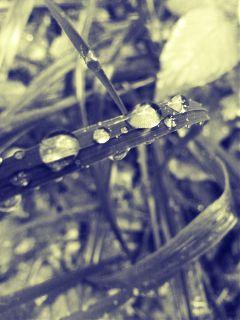 grass drop water rain
