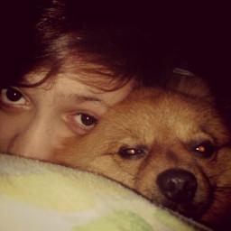 cute sleepintime photography pets & animals people