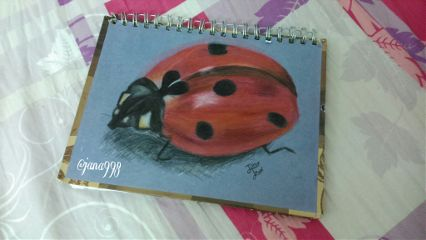 art colorful drawing draw ladybird