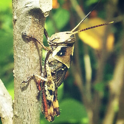 interesting nature photography grasshoppers insects