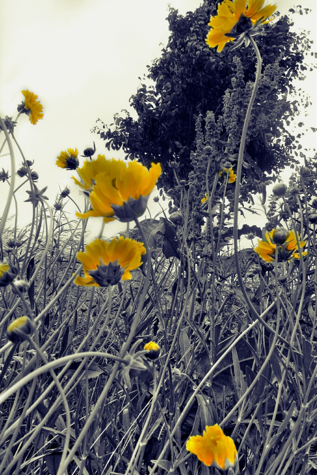Cellophane flowers of yellow and green towering over cellophane flowers of yellow and green towering over mightylinksfo