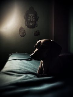 photography dog mansbestfriend petsandanimals