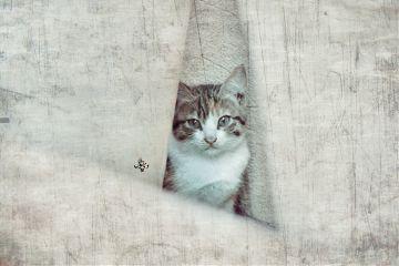 cute cat vintage