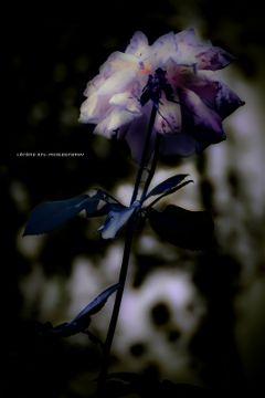 colorful flower photography editstepbystep