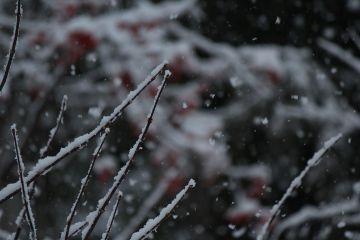 snow winter photography nature japan