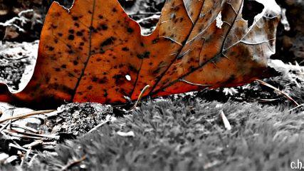 colorsplash earthphoto nature blackandwhite