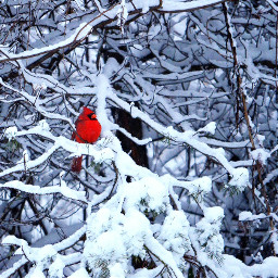 nature photography winter snow