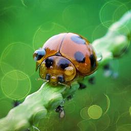 animals bokeh cute macroart photography
