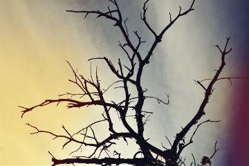 tree winter sky sunset cold