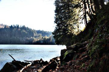 lake photography trees washington hike