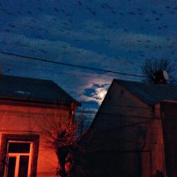 night_time moon birds