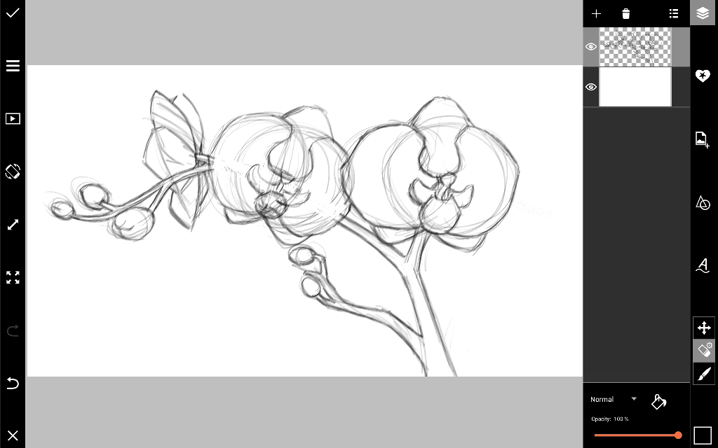 how to draw an orchid