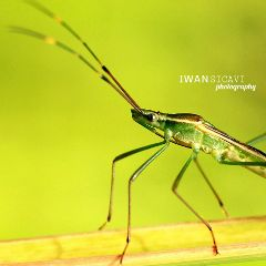 macro nature photography petsandanimals
