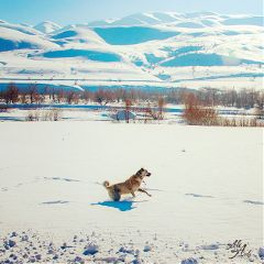 winter snow landscape dog nature