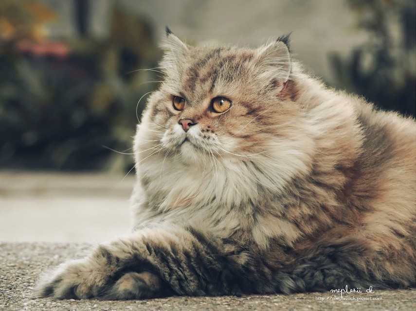 Have a beautiful day my dear friends  #cat #pets & animals  #photography  #cute