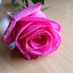 bloom nature love