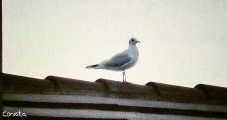 bird freetoedit petsandanimals